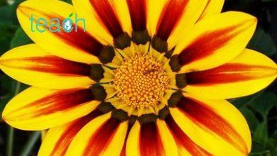 تصویر از تقارن در گلها (symmetry)