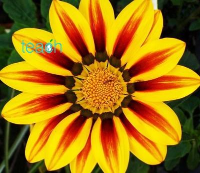تقارن در گلها (symmetry)