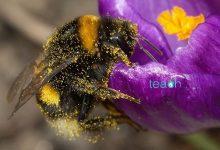 تصویر از انواع حشرات گرده افشان