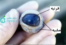 تصویر از تشریح چشم