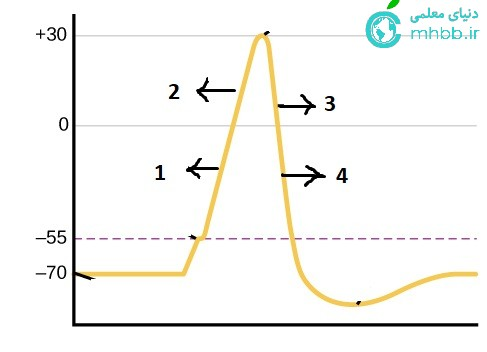 نمودار پتانسیل عمل