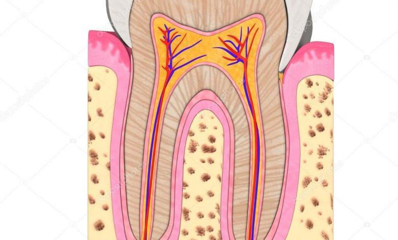 تصویر از دندان