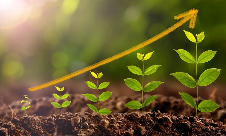 تصویر از رشد و نمو در گیاهان+ دانلود پاورپوینت رشد و نمو در گیاهان