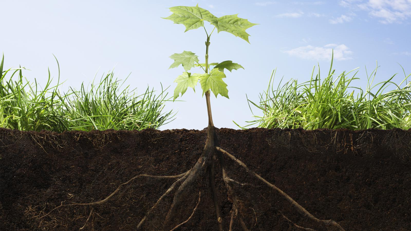 مورفولوژی گیاهی+ دانلود پاورپوینت مورفولوژی گیاهی
