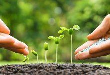 تصویر از دانلود پاورپوینت تغذیه ی گیاه