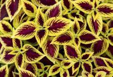 تصویر از دانلود پاورپوینت مورفولوژی و تشریح گیاهی