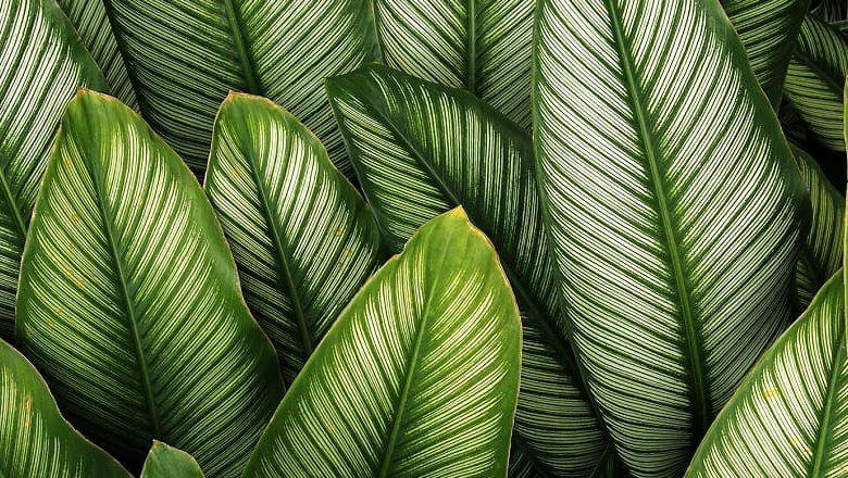 تصویر از متابولیسم در گیاهان چگونه صورت می گیرد + دانلود پاوپوینت متابولیسم در گیاهان