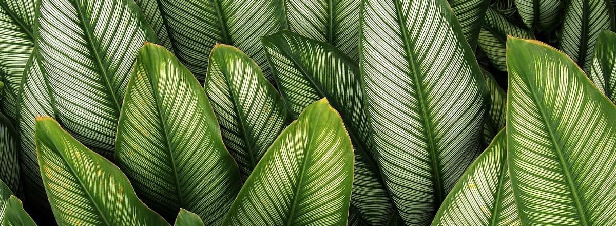 متابولیسم در گیاهان چگونه صورت می گیرد + دانلود پاوپوینت متابولیسم در گیاهان