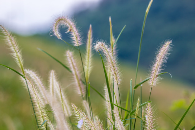 تصویر از دانلود جزوه شناسایی گیاهان مرتعی ۱