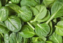تصویر از دانلود جزوه شناسایی گیاهان مرتعی ۲