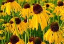 تصویر از دانلود پاورپوینت سیستماتیک گیاهی